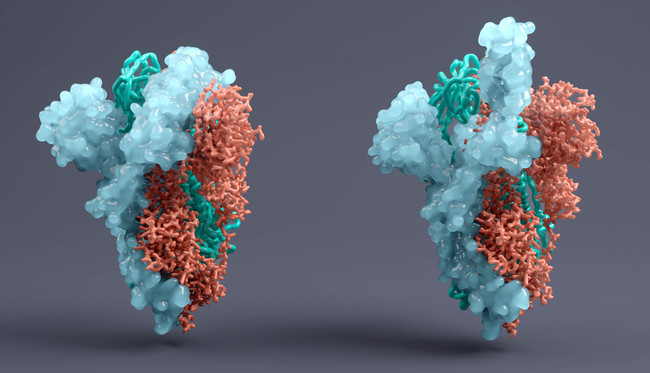Spike-Protein SARS-CoV-2  (Quelle: Viaframe/Corbis/GettyImages)