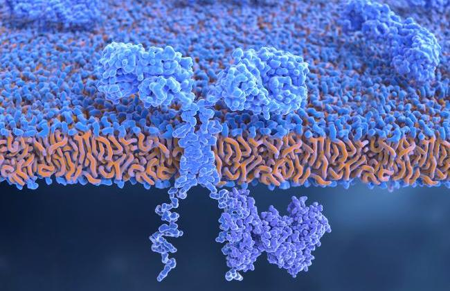 Chimeric antigen receptor (CAR) on T-cell (Source: Juan Gaertner/ScienceFotoLibrary/Getty Images)